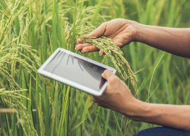 Ashar 15: Best Nepali Agriculture Apps for Successful Farming in 2020